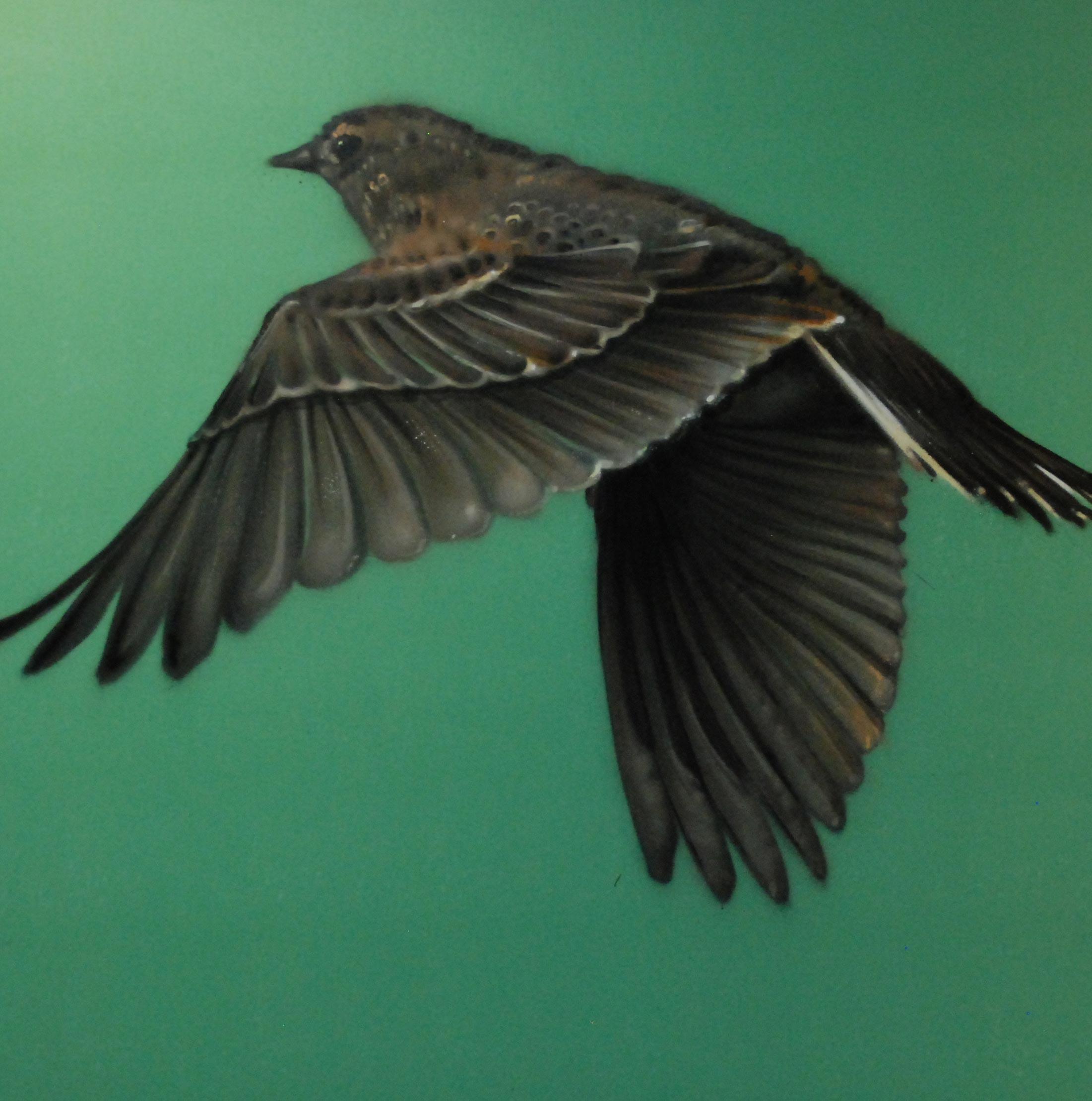 arpi fly away